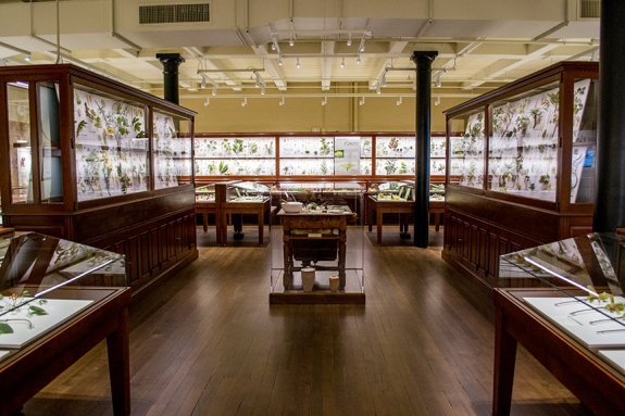 "The  ""Glass Flowers"" Gallery at the Harvard Museum of Natural History."
